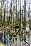 Terra do pântano no parque natural da ilha de Usedom Fotografia de Stock