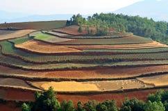 Terra do vermelho de Dongchuan Fotos de Stock Royalty Free