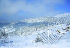 Terra e árvores do inverno Imagens de Stock