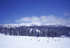 Terra e árvores do inverno Fotografia de Stock