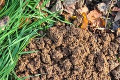 Terra e foglie organiche dell'erba Immagini Stock Libere da Diritti