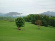 Terra e montanha da grama Fotos de Stock Royalty Free