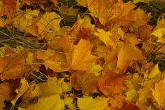 Terra em uma coberta do outono Foto de Stock