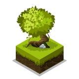 Terra, erba ed albero isometrici della natura Fotografia Stock