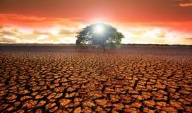 Terra estéril do deserto com uma única árvore verde fotografia de stock royalty free