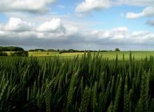 terra fertile Immagini Stock Libere da Diritti