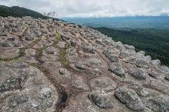 A terra firme rochosa do botão ocorre naturalmente no natio do kra do rong do hin de Phu Foto de Stock Royalty Free