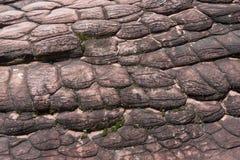 A terra firme rochosa do botão ocorre naturalmente no natio do kra do rong do hin de Phu Foto de Stock