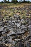 Terra frantumata per la pianta qualsiasi cereale Immagini Stock Libere da Diritti