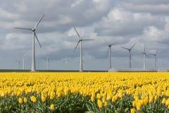 A terra holandesa com turbinas eólicas e a tulipa amarela colocam Foto de Stock Royalty Free