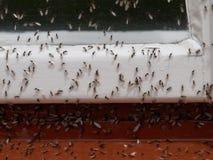 Terra-incastramento delle formiche fotografia stock libera da diritti