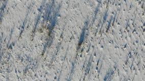 Terra invasa con gli arbusti e le erbacce, zona rurale Steppa innevata Vista aerea con la mosca liscia su video d archivio