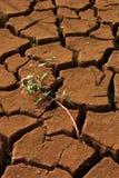 Terra marcia Fotografie Stock