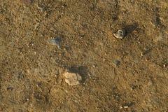 Terra marrone sporca asciutta con le crepe Fotografia Stock