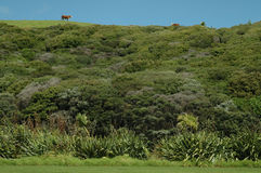 Terra na ilha norte, Nova Zelândia Imagem de Stock