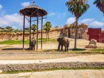 Terra Natura, Benidorm, Spain; August 15, 2019: Elephants in their recreation area. Natural nature travel desert animal holy sky gold dome tourism wildlife zoo stock photos