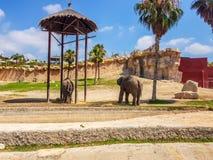 Terra Natura, Benidorm, Spanje; 15 augustus, 2019: Olifanten op hun recreatiegebied stock foto's