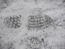 Terra nevado das pegadas Fotografia de Stock