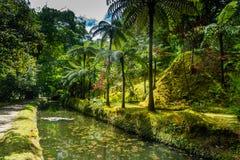 Terra Nostra botanisk trädgård med orörd flora på Furnas, Az Arkivfoto
