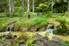 Terra Nostra Garden in Furnas town, Sao Miguel island, Azores, Portugal Royalty Free Stock Image