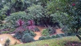 Terra nostra garden lush vegetation stock images