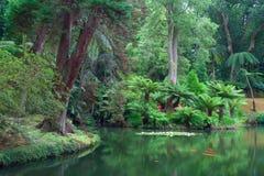 Terra Nostra Garden op het eiland van Saomiguel, de Azoren royalty-vrije stock foto