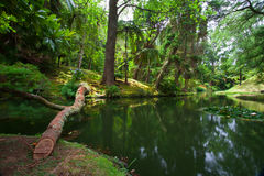 The Terra Nostra Garden on Sao Miguel island, Azores. stock photography