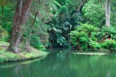 The Terra Nostra Garden on Sao Miguel island, Azores. royalty free stock photography