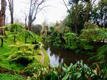 Terra Nostra ogród, S Miguel, Azores Obrazy Stock