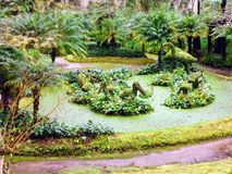 Terra Nostra ogród, S Miguel, Azores Obraz Royalty Free