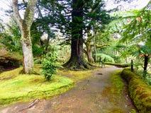 Terra Nostra ogród, S Miguel, Azores Fotografia Royalty Free