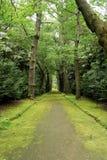 Terra Nostra Park, het eiland van Saomiguel, Portugal royalty-vrije stock afbeelding