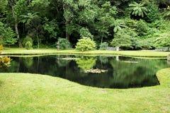 Terra Nostra park, Sao Miguel wyspa, Portugalia obraz royalty free