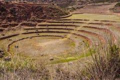 Terra?os circulares do Inca antigo na esta??o agr?cola da experi?ncia do Moray, Peru, ?m?rica do Sul fotografia de stock royalty free