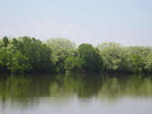 Terra pantanoso Imagem de Stock Royalty Free