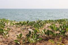 Terra perto do mar Fotografia de Stock Royalty Free
