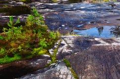 Terra pietrosa in una foresta nordica Immagine Stock Libera da Diritti