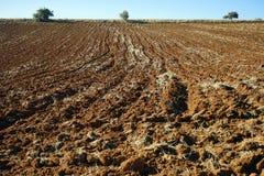 Terra Ploughed Fotografia de Stock Royalty Free