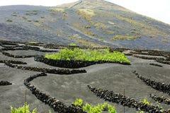 Terra preta vulcânica com os vinhedos no La Geria, Lanzarote, Ilhas Canárias imagens de stock royalty free