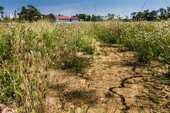 terra rachada Foto de Stock
