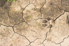 Terra rachada com trilha do cão foto de stock