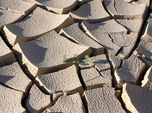 Terra rachada e seca Fotos de Stock