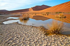 Terra rachada na paisagem namibiana Imagens de Stock