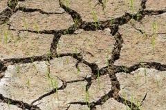 Terra rachada seca Foto de Stock Royalty Free