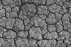 Terra rachada seca Fotos de Stock Royalty Free