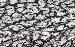 Terra rachada seca Fotografia de Stock Royalty Free