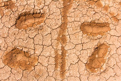 Terra rachada seca da textura Fotografia de Stock Royalty Free