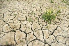 Terra rachada seca e planta verde Fotografia de Stock
