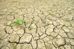 Terra rachada seca a planta Fotos de Stock Royalty Free