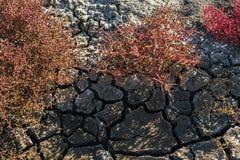 A terra rachou-se da seca fotos de stock